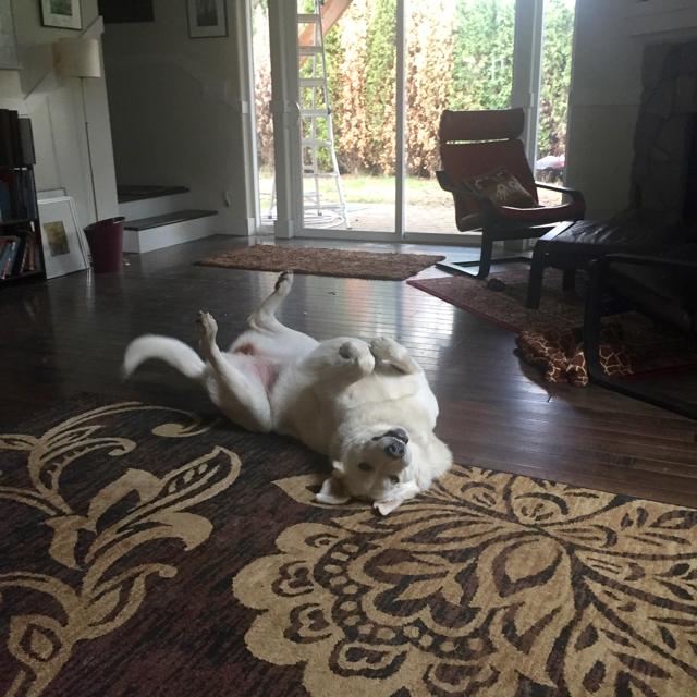 Kaylee dog, upside down