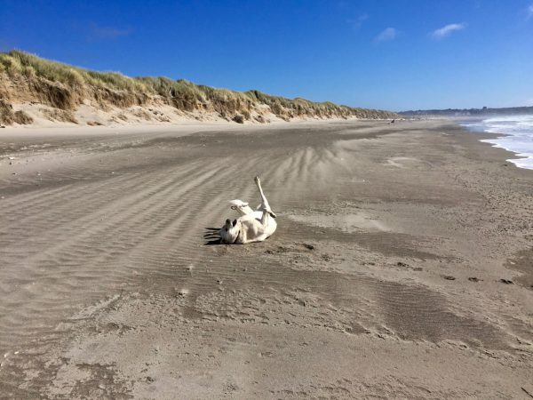 "Kaylee doing ""doga"" on the beach"