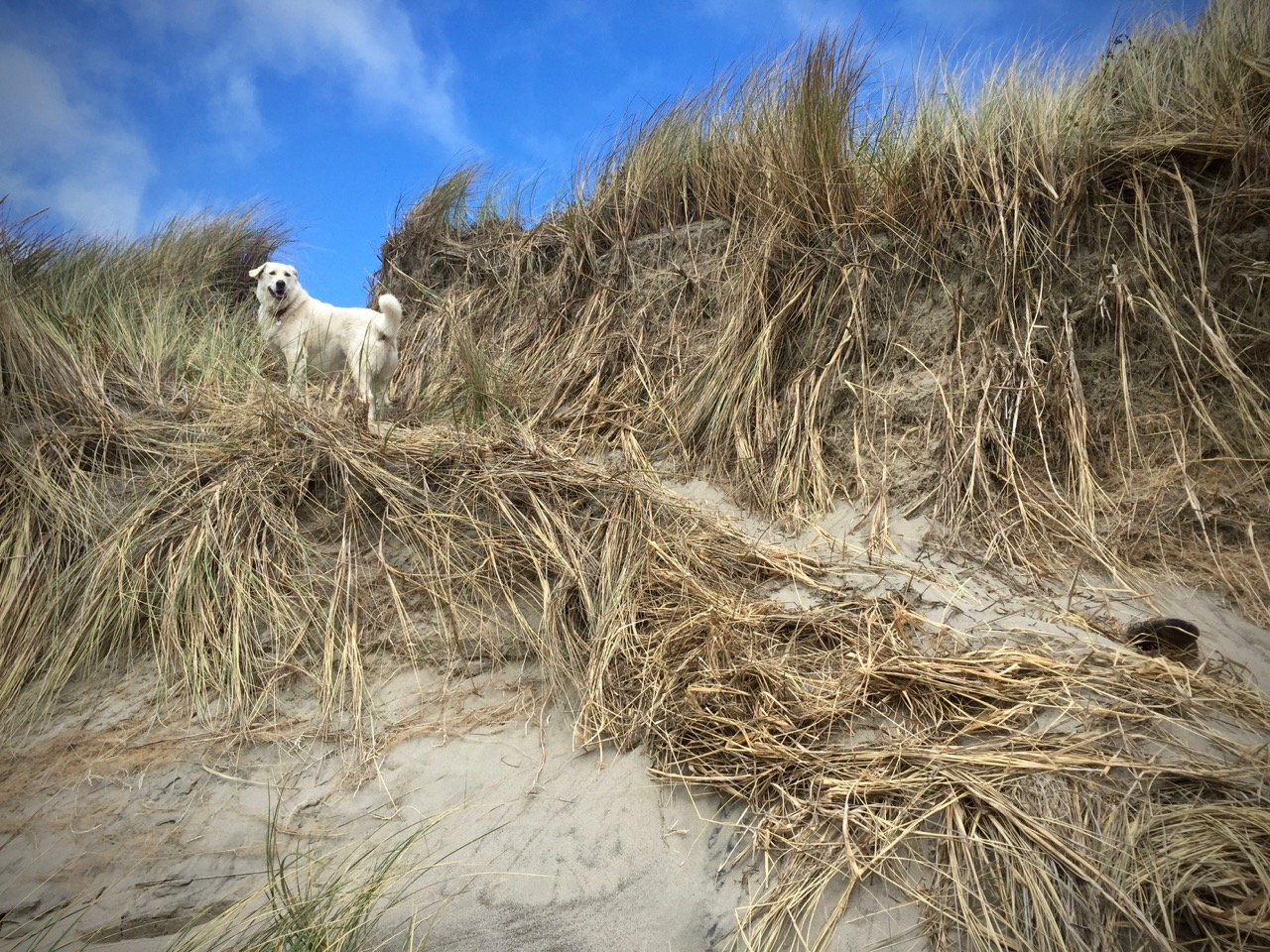 Kaylee, looking quite pleased, atop the correct dune.