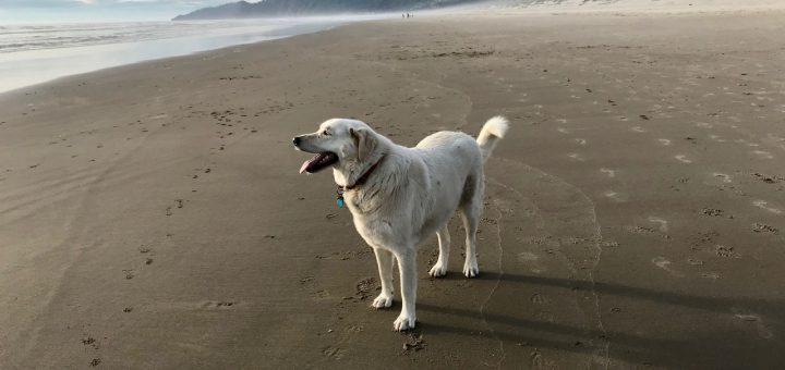 kaylee at manzanita beach